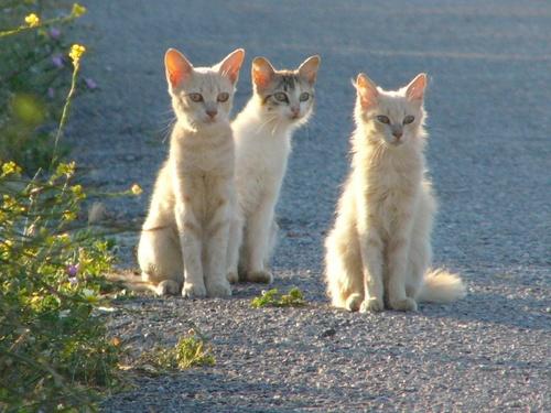 three cats by patman