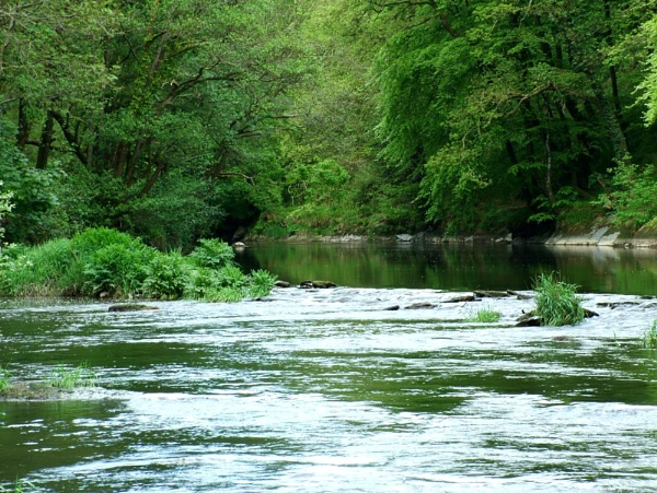 River Teifi by piccy