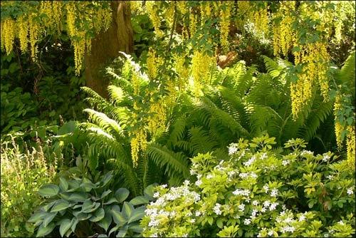 Fern Garden by icafe
