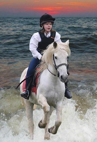 Sea Horse by silburkp