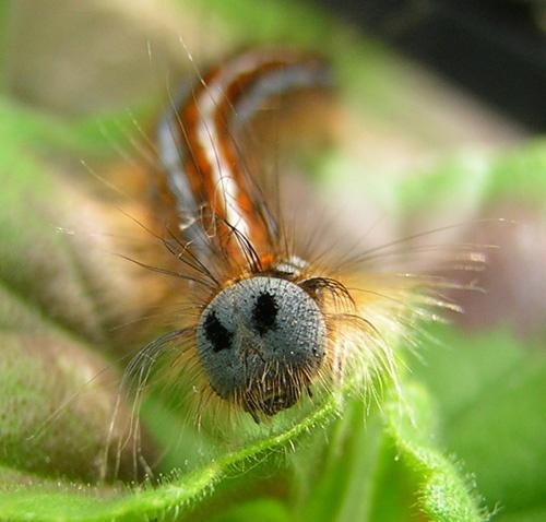 Caterpillar by Fran
