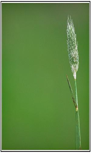 Grass by Glynn