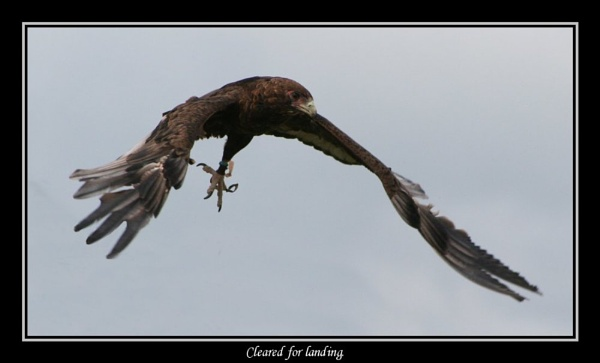 Cleared for landing. by SirEatAlot