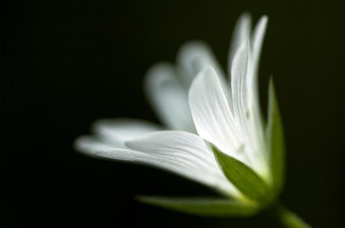 Softly White by uggyy