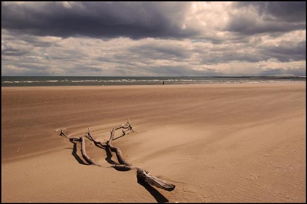 Driftwood by motman