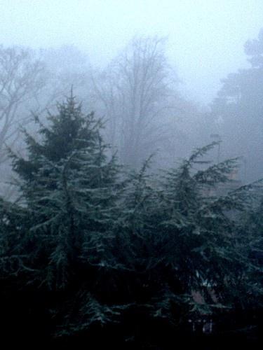 Foggy morning by ktish