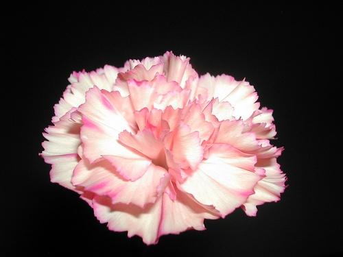 A  floating  flower by Georgiah