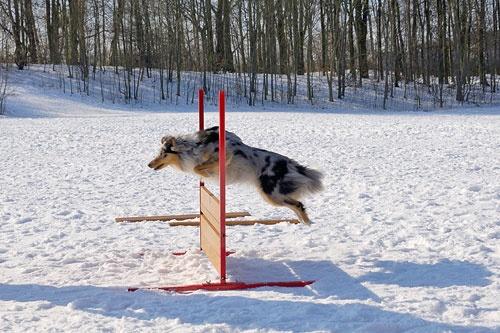 Snowjump by plstsn