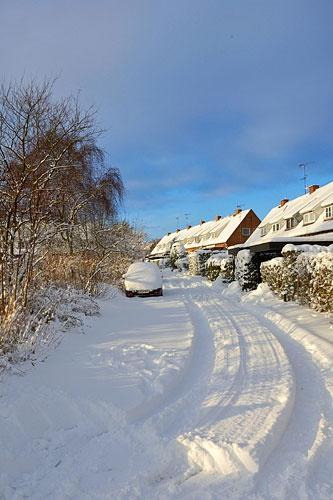 Sunny Winter 2 by plstsn