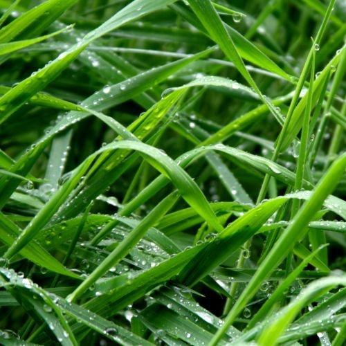 Wet grass by bmh1