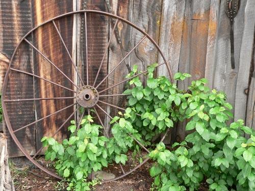 Wagon wheel by KingBee