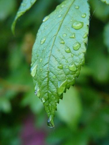 rain drops by patman