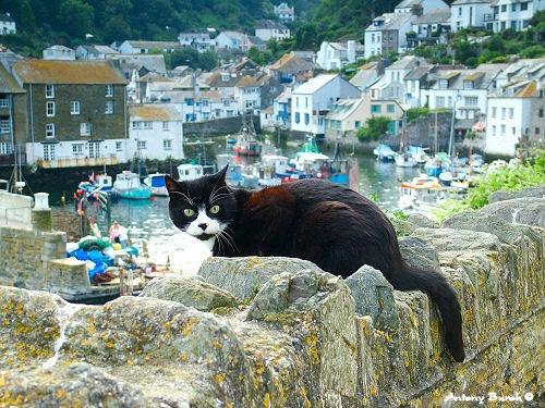 The Black Cat of Polperro by AntonyB