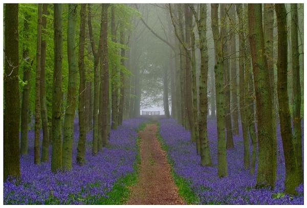 Misty Blue... by billydo