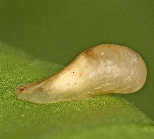 Baby Snail perhaps by rdown