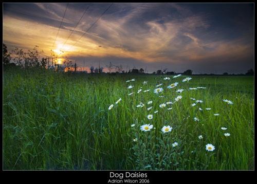 Daisies at Drax by ade_mcfade