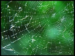 with spiderweb