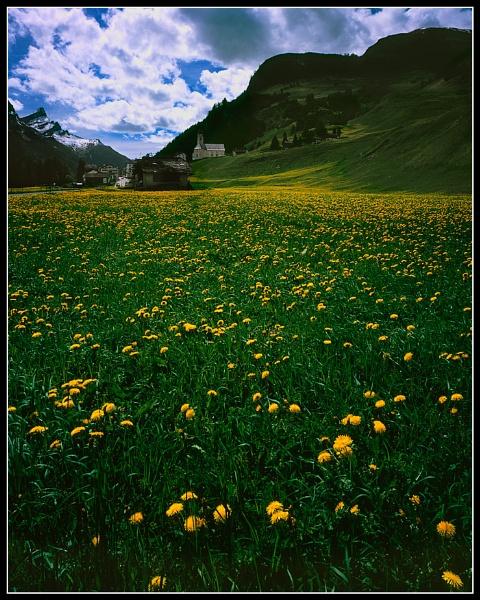 Dandelion swarm by joolsb