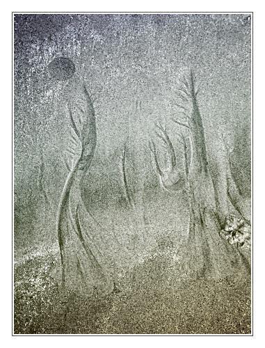 Woodland Storm by JohnHorne