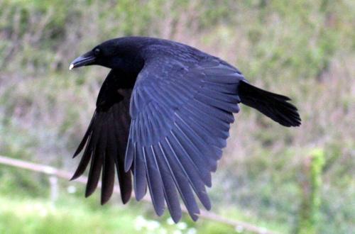 black bird where are you by Matthew_Leyshon