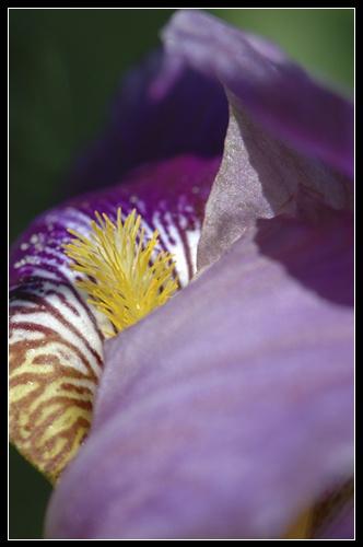Macro Flower by camerashake