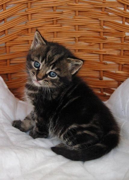 kitten2 (series) by sarac