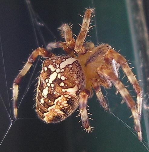Incy wincy spider... by Emmaelle