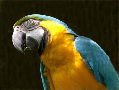 Macaw by vonny