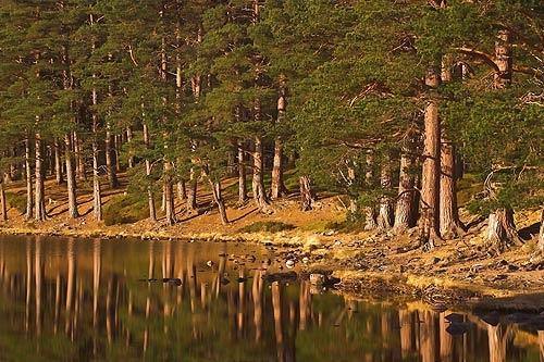 Loch an Eileen Mkii by ivory