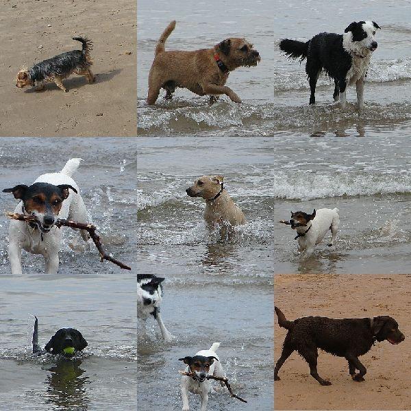 Dogs by tenerifejohn