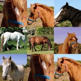 A Horse, a Horse my...