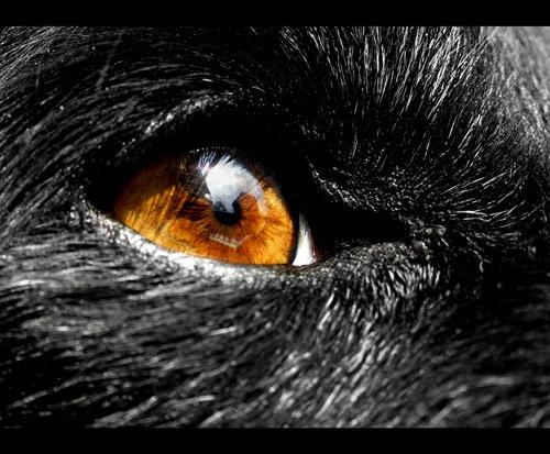 Eye of the dog by Sheenanigans