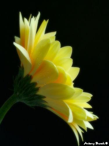 Catching the Light by AntonyB