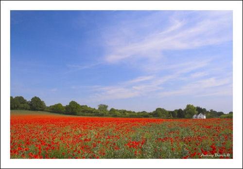Poppy Cottage 2 by AntonyB