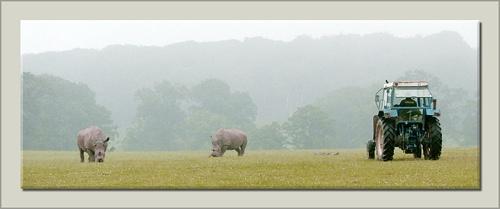 Rhino Farm by MarkyL