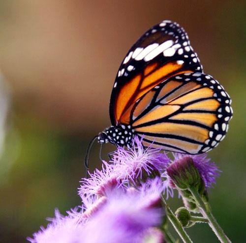 butterfly by bsbossman