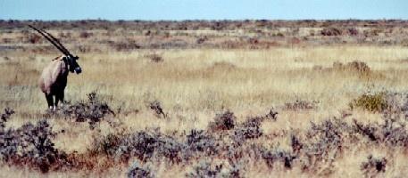 Oryx by Deerman