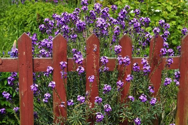 Purple gate by Pogs