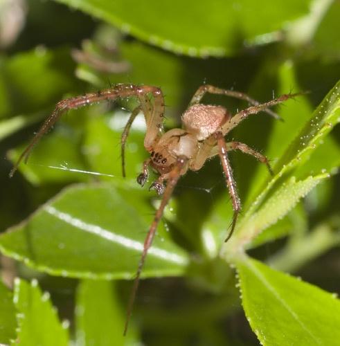 Arachnophobia by daiprice