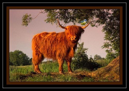 Highlander by sooty 36