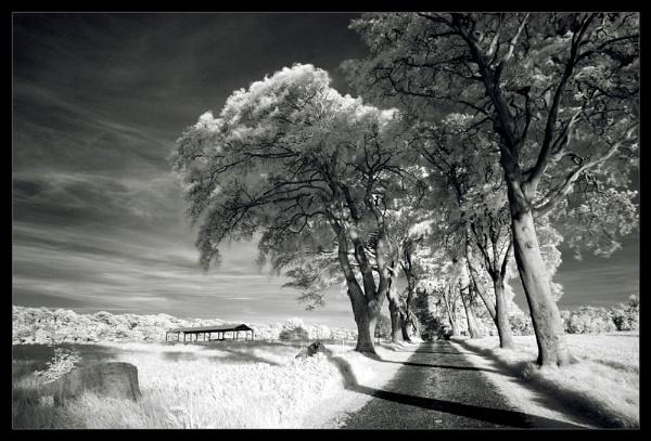 IR Landscape 2 by Consulo