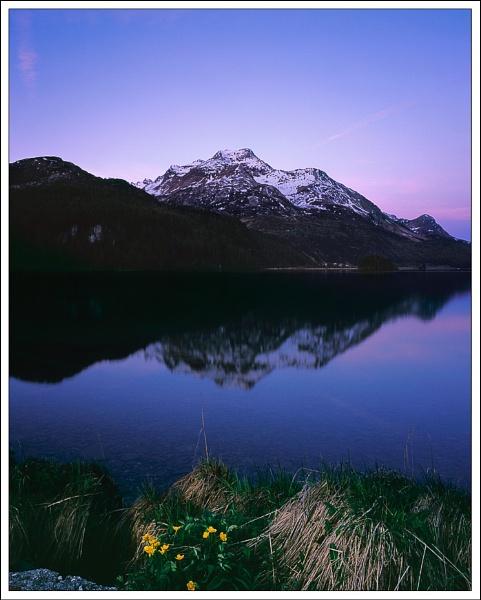 Marsh Marigold and mountain by joolsb