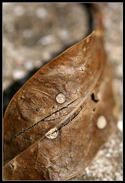Dead Leaf Pattern by Morpyre