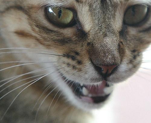 CUBAN STREET CAT by DIGILUX