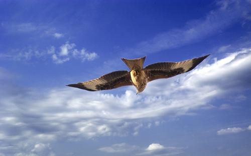 Kite Flight by BOB S