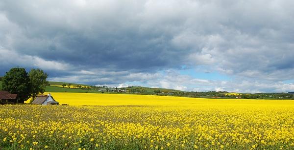 Mellow Yellow by motman