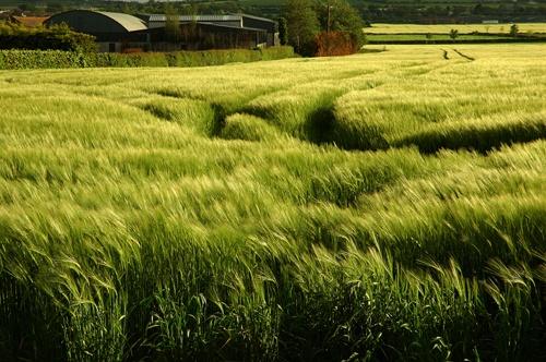 green field by tonyjf