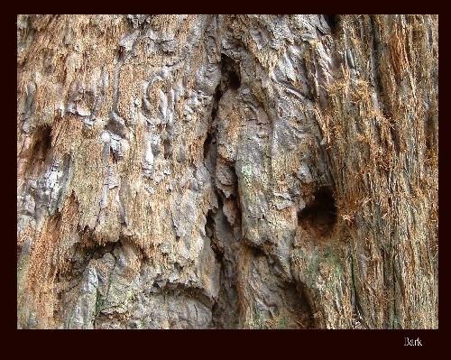 Tree bark by ktish