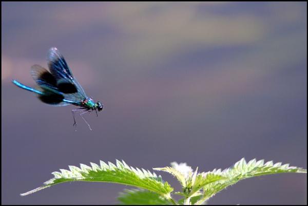 landing by petegaylard