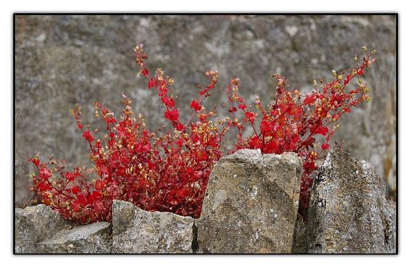 Wall Flower by Billies
